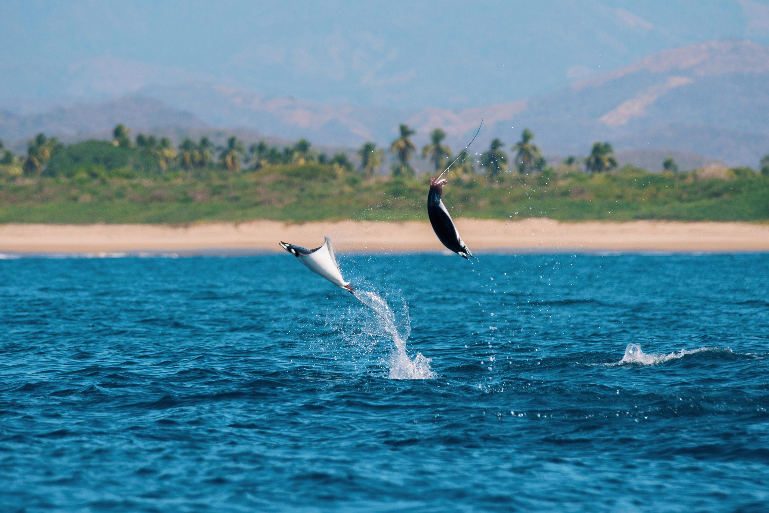 Ballenas-Ixtapa-Zihuatanejo-Fotografia-Heiko-Bothe-8.JPG