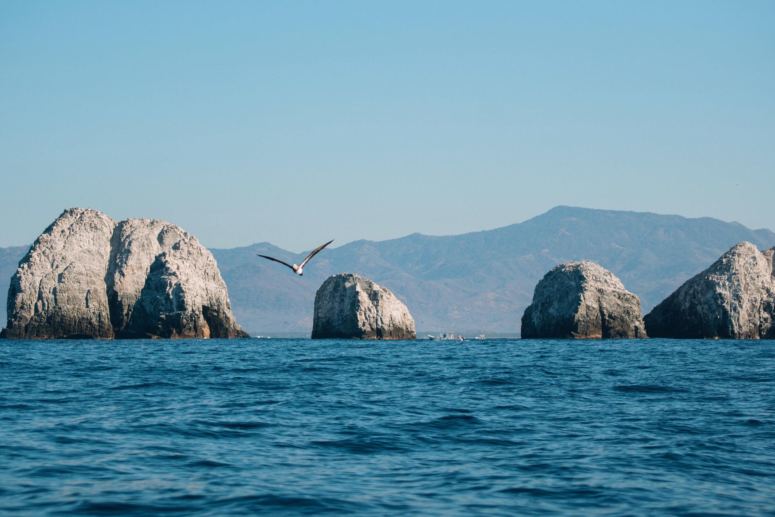 Ballenas-Ixtapa-Zihuatanejo-Fotografia-Heiko-Bothe-18.JPG