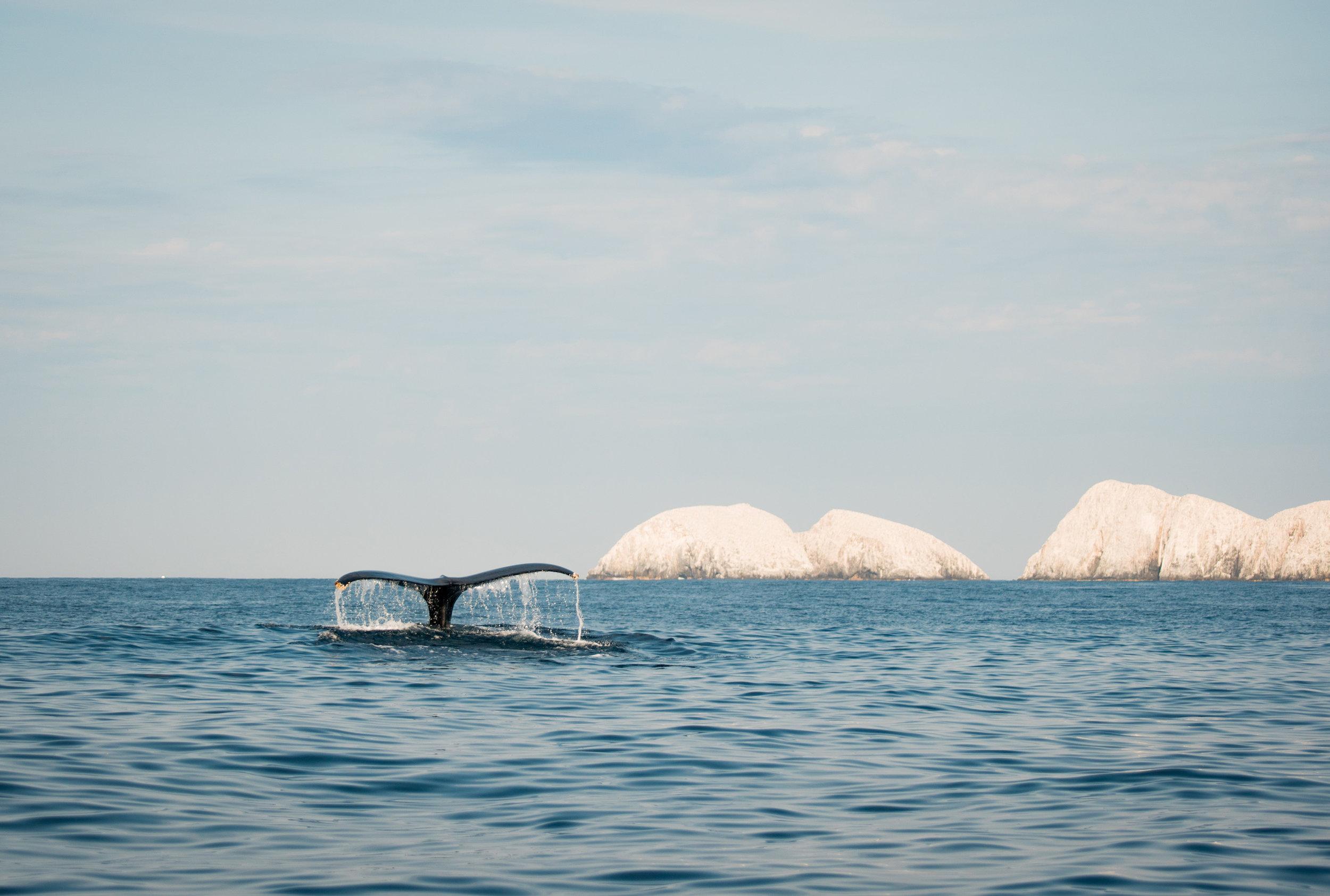 Ballenas-Zihuatanejo-Ixtapa-Fotografia-Heiko-Bothe.jpg