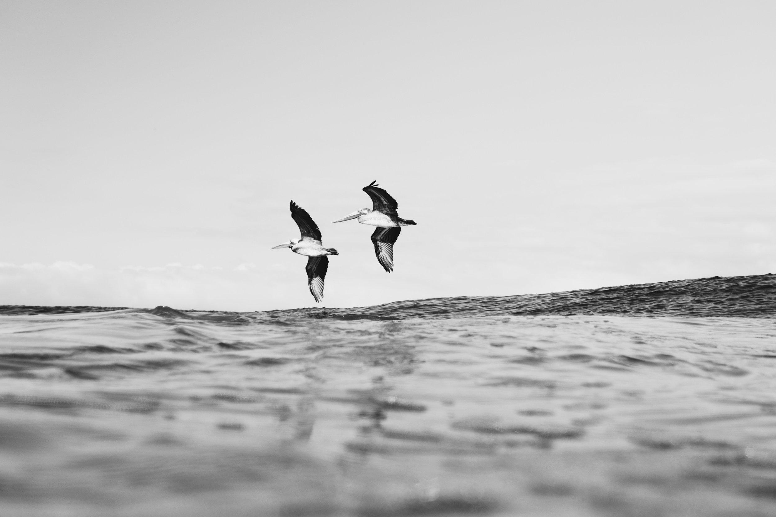 Surf-Mexico-Zihuatanejo-Sayulita-Ixtapa-Zihuatanejo-Diego-Cadena-Olas-Fotografia-Heiko-Bothe-80.jpg