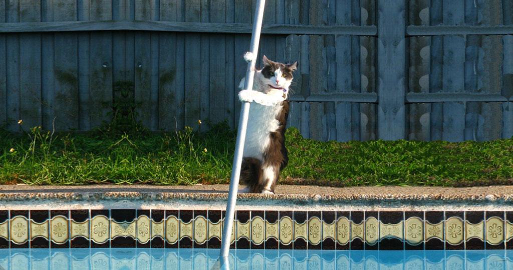 pool-cleaning-company-8.jpg