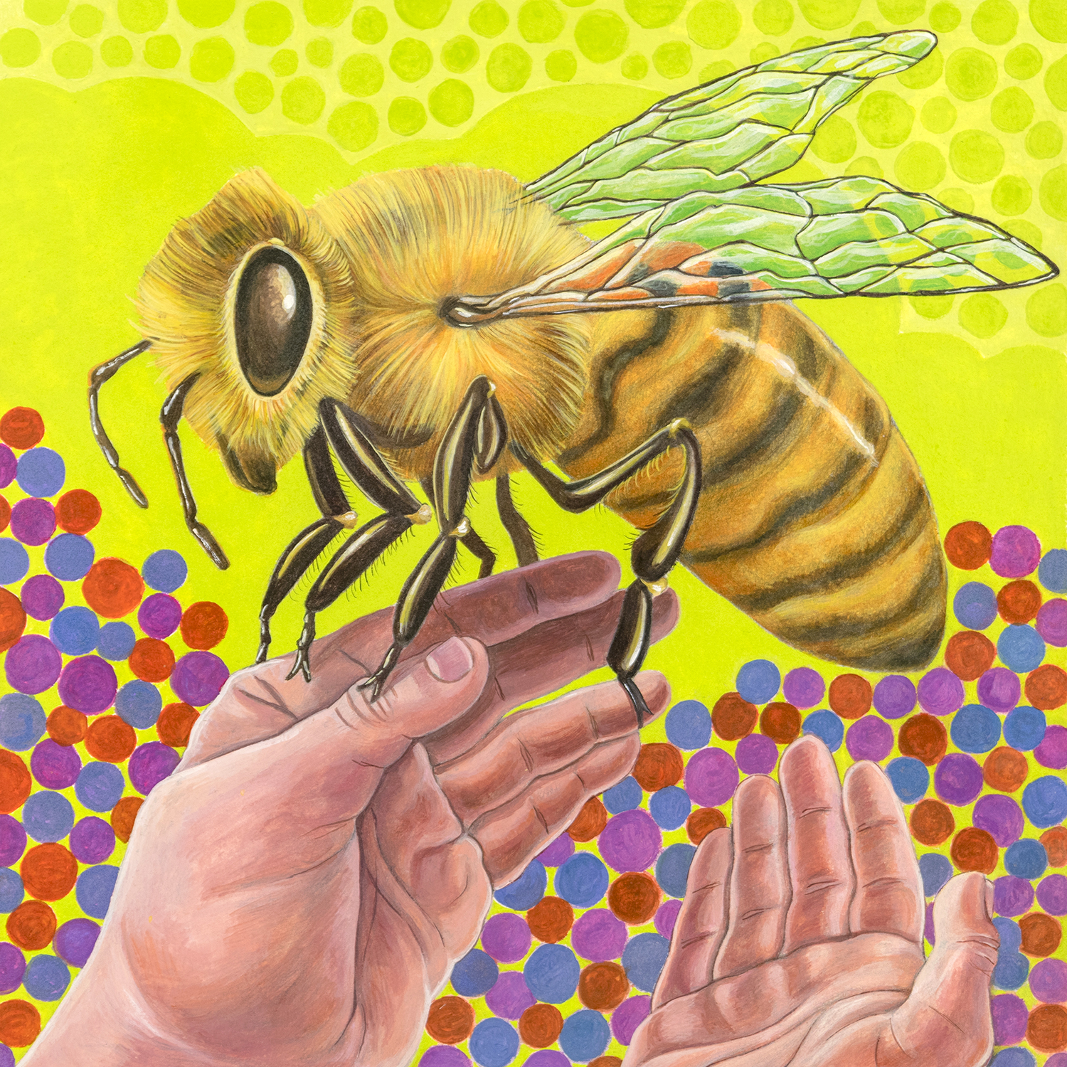 image_honey_bee_hand_1500.jpg