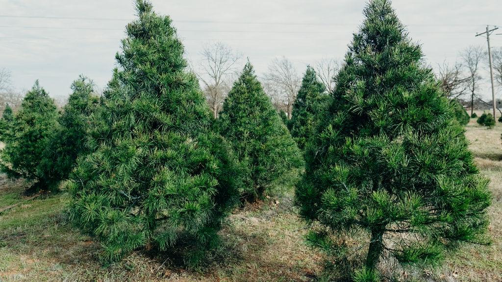 shtf-trees.jpg