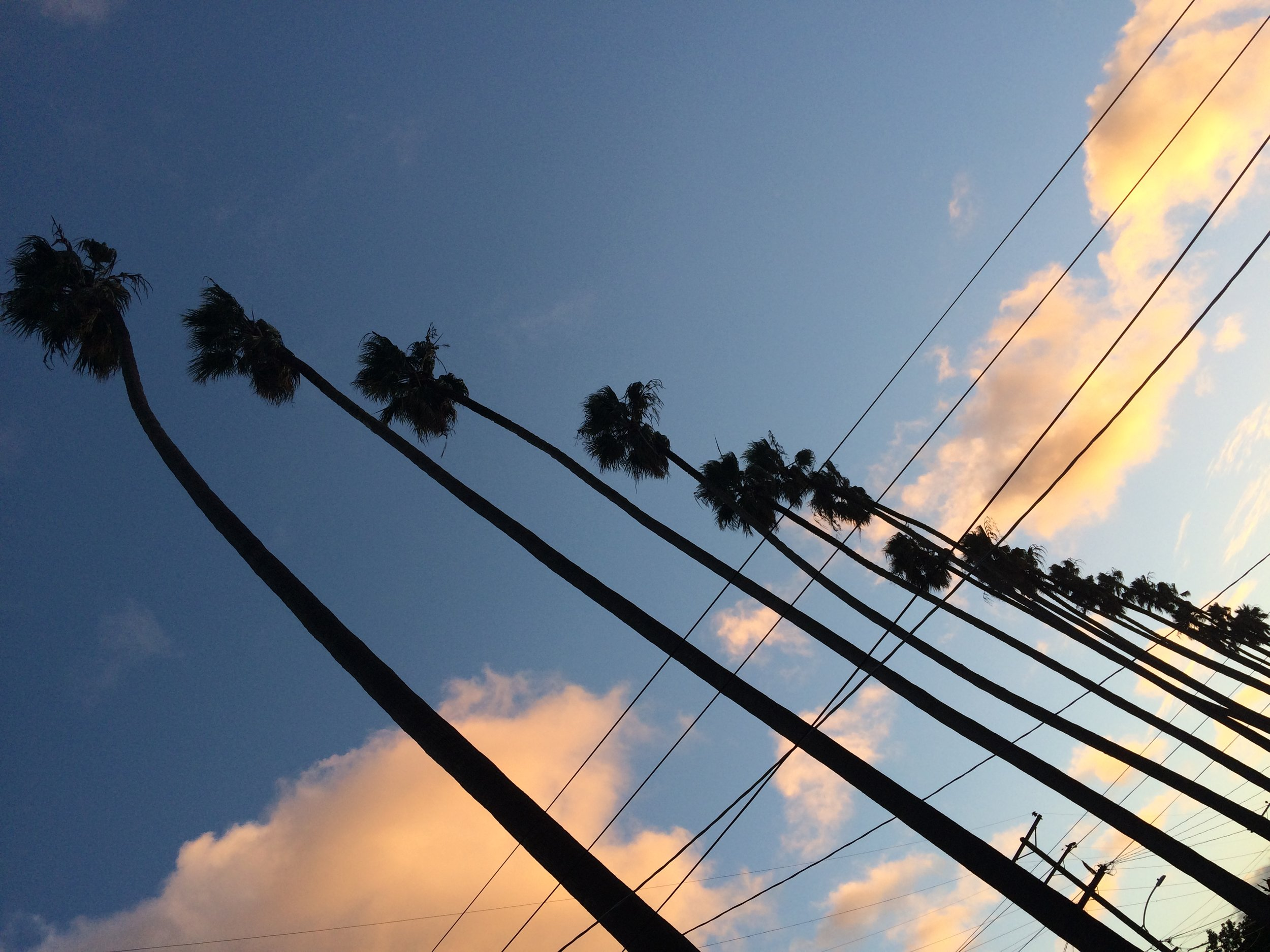 palms sideways blow up (1).jpg