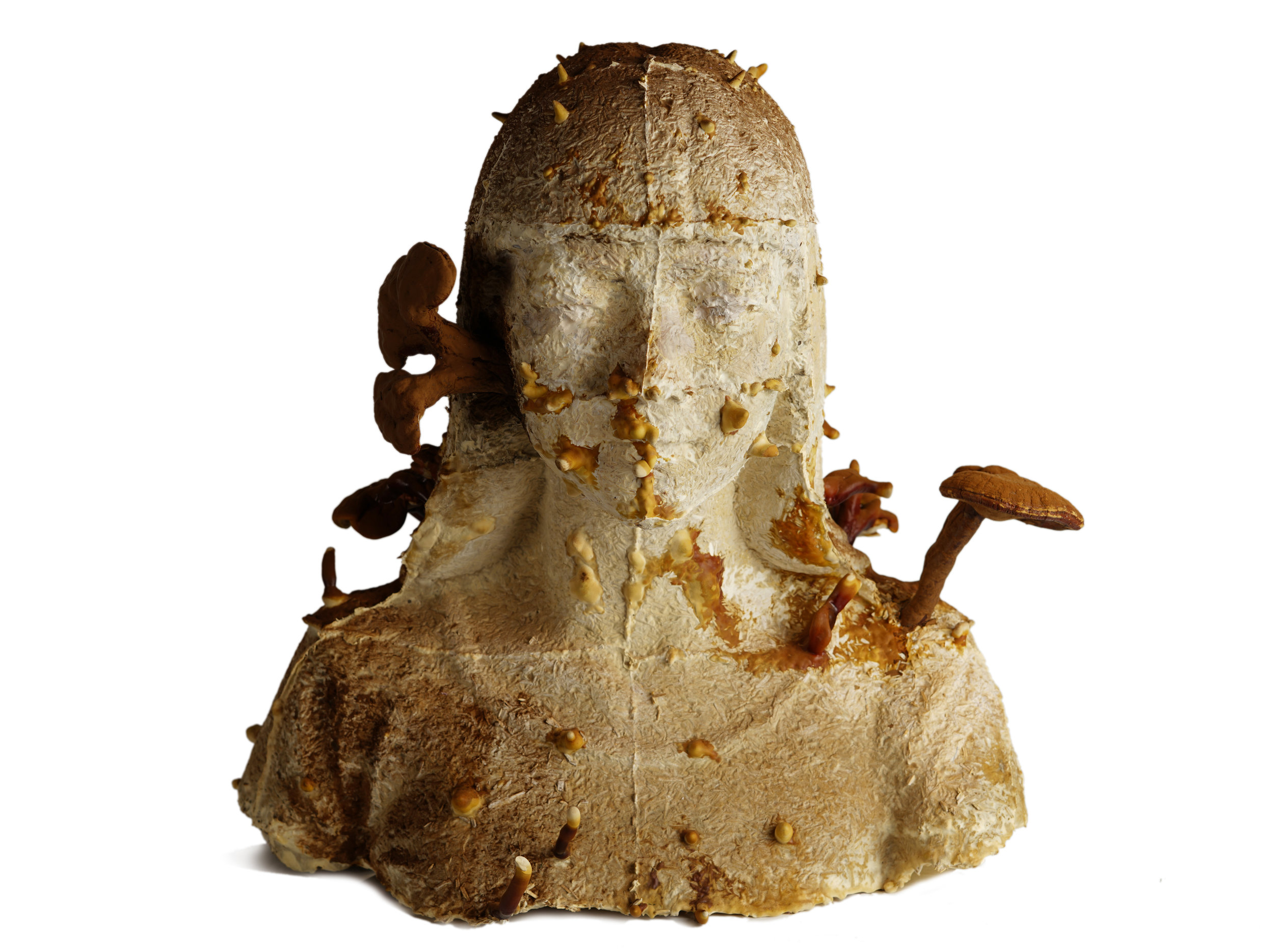 Lingzhi Girl VII , cultivated lingzhi mushrooms and wood chips, 2016-20