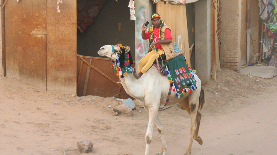 Camel and cell phone!