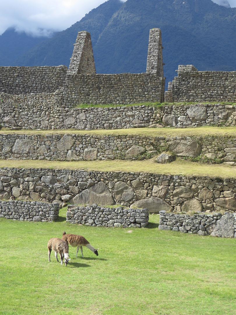 Llamas and stone. Beautiful.