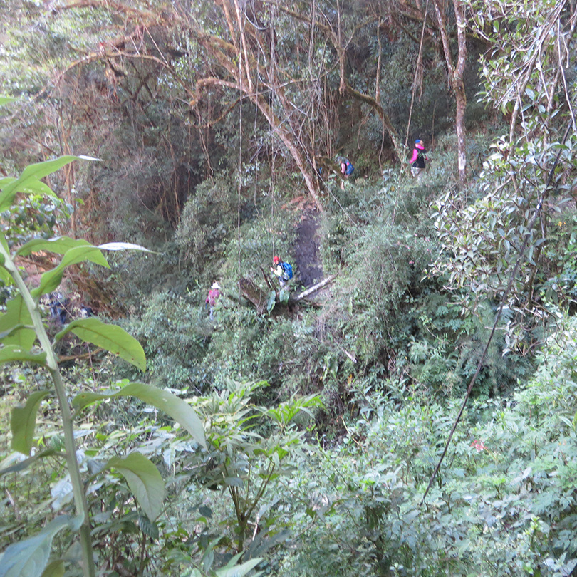 Yep: the trails were steep and densely-vegetated!