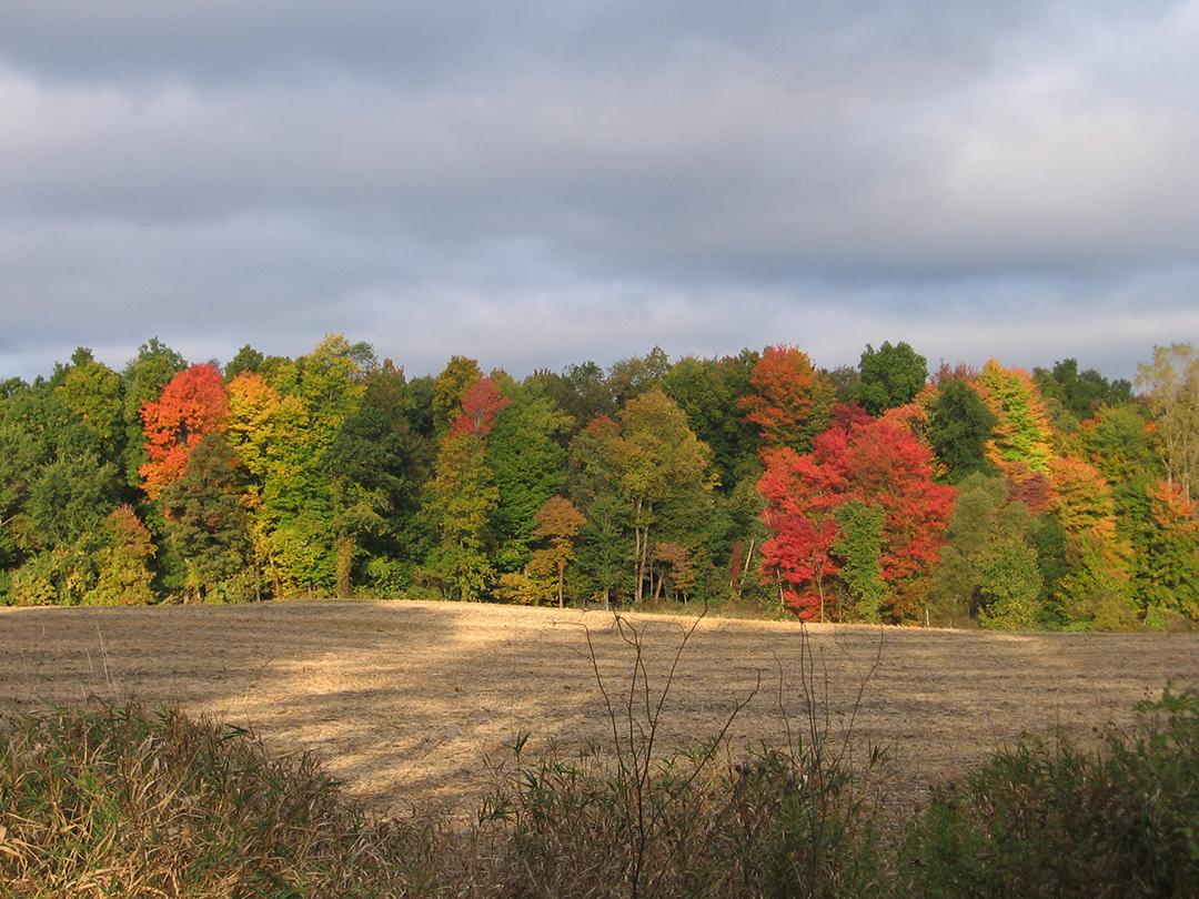2005.10.Fero.Autumn.JPG