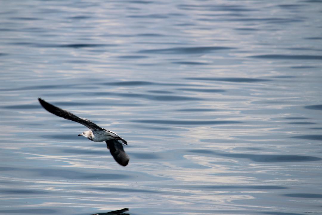 2016.08.Birds.03.jpg