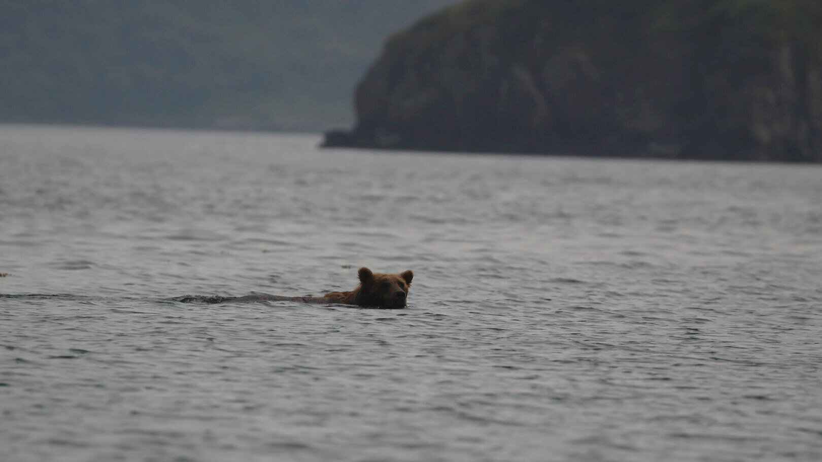 It seemed counterintuitive, but we even saw bears swimming in the water!
