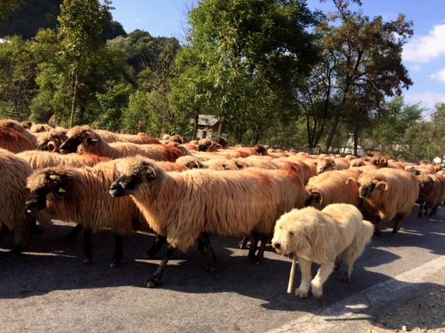 Romanian traffic jam