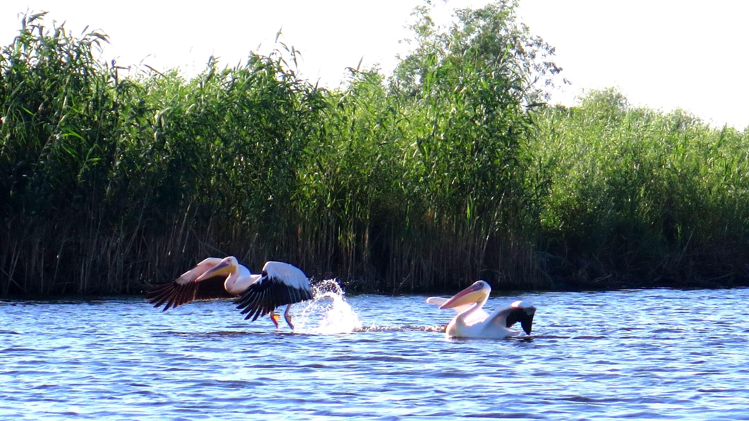 Danube Delta Tours -