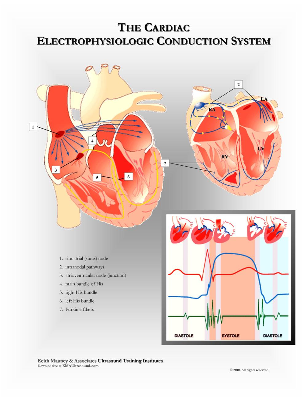 KMA Ultrasound Cardiac Electrophysiologic Conduction System