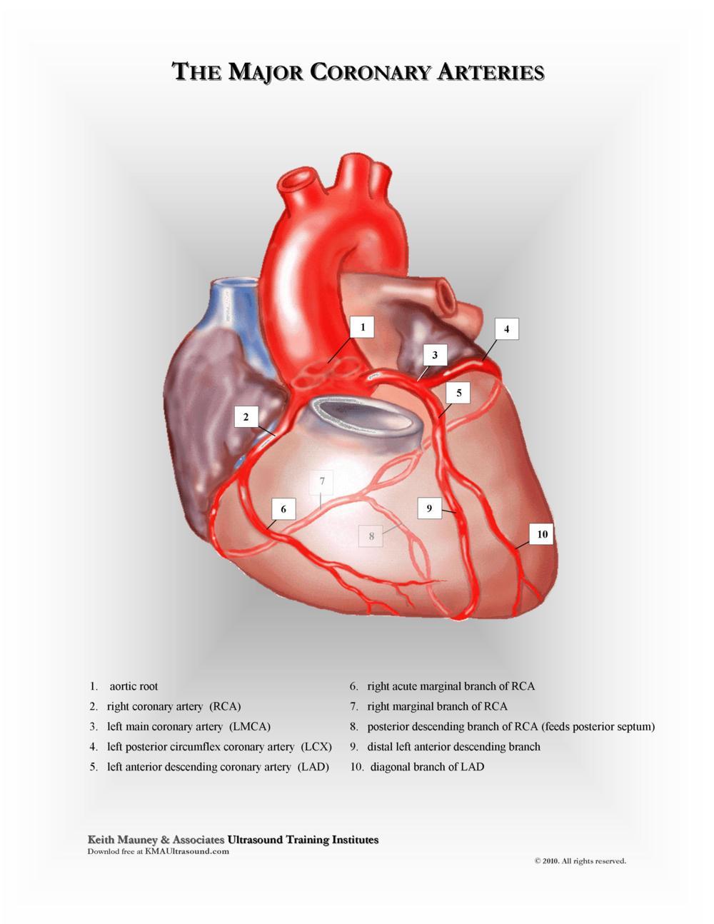 KMA Ultrasound Major Coronary Arteries