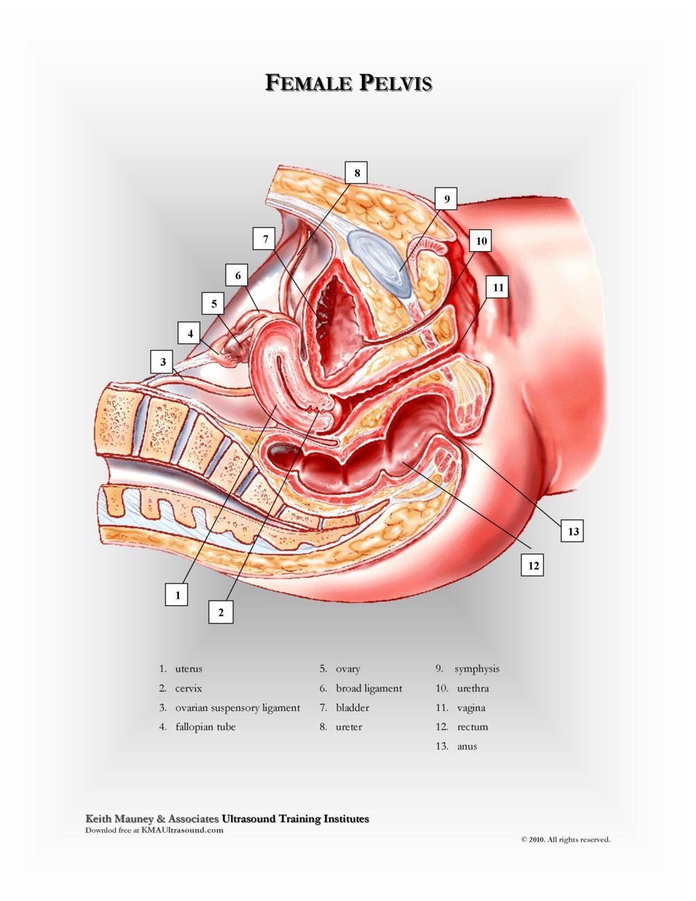 KMA Ultrasound Female Pelvis
