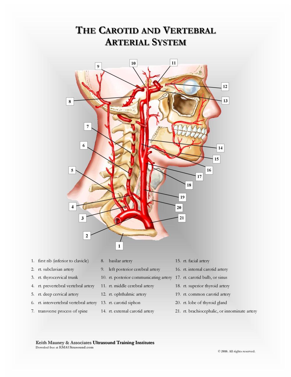 KMA Ultrasound Carotid and Vertebral Arterial System