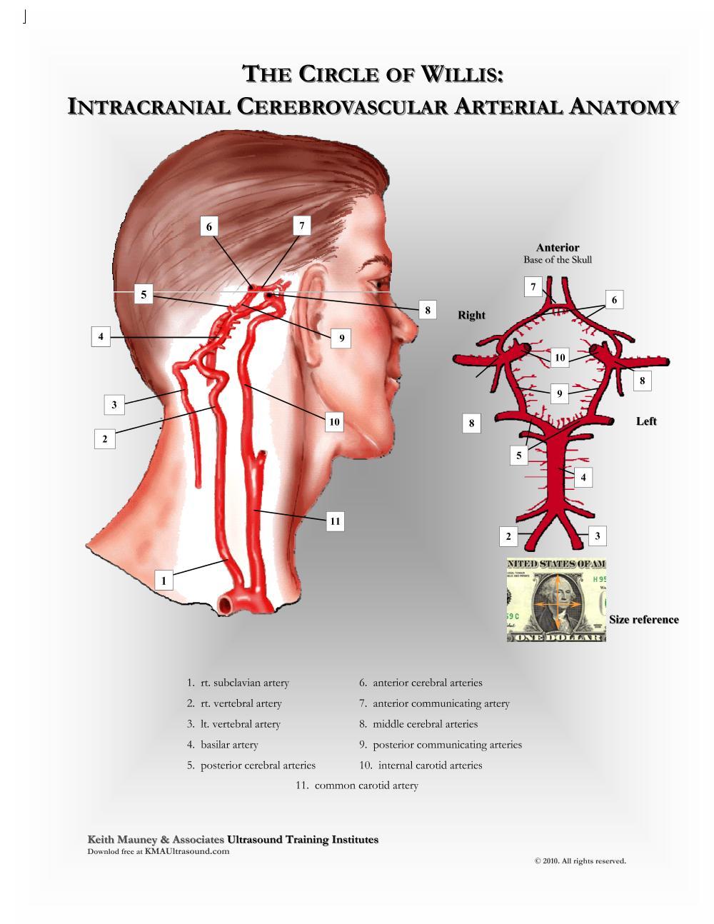 KMA Ultrasound Circle of Willis