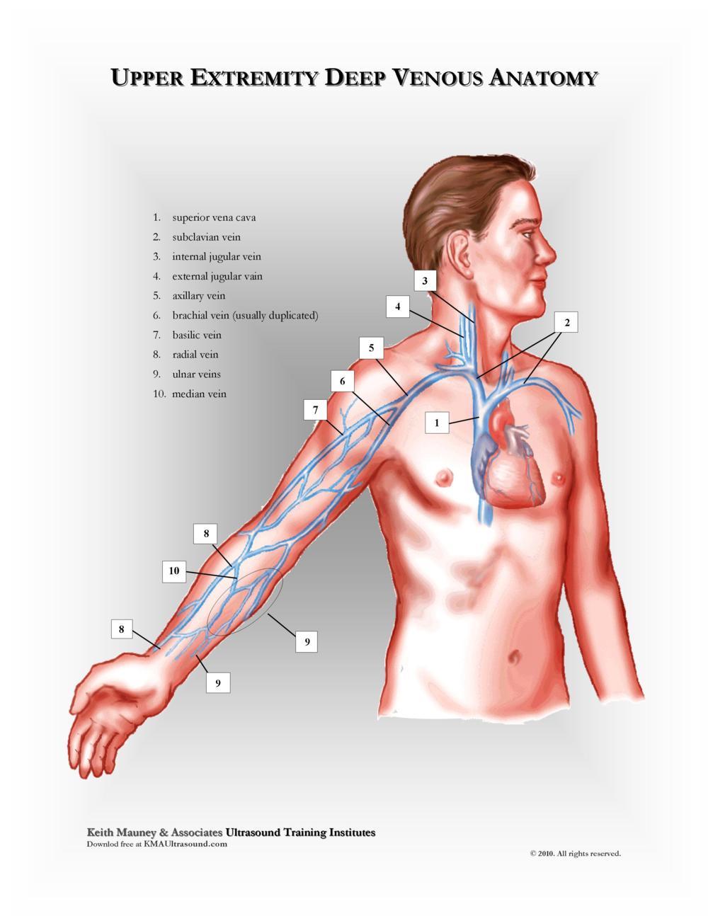 KMA Ultrasound Upper Extremity Deep Venous Anatomy