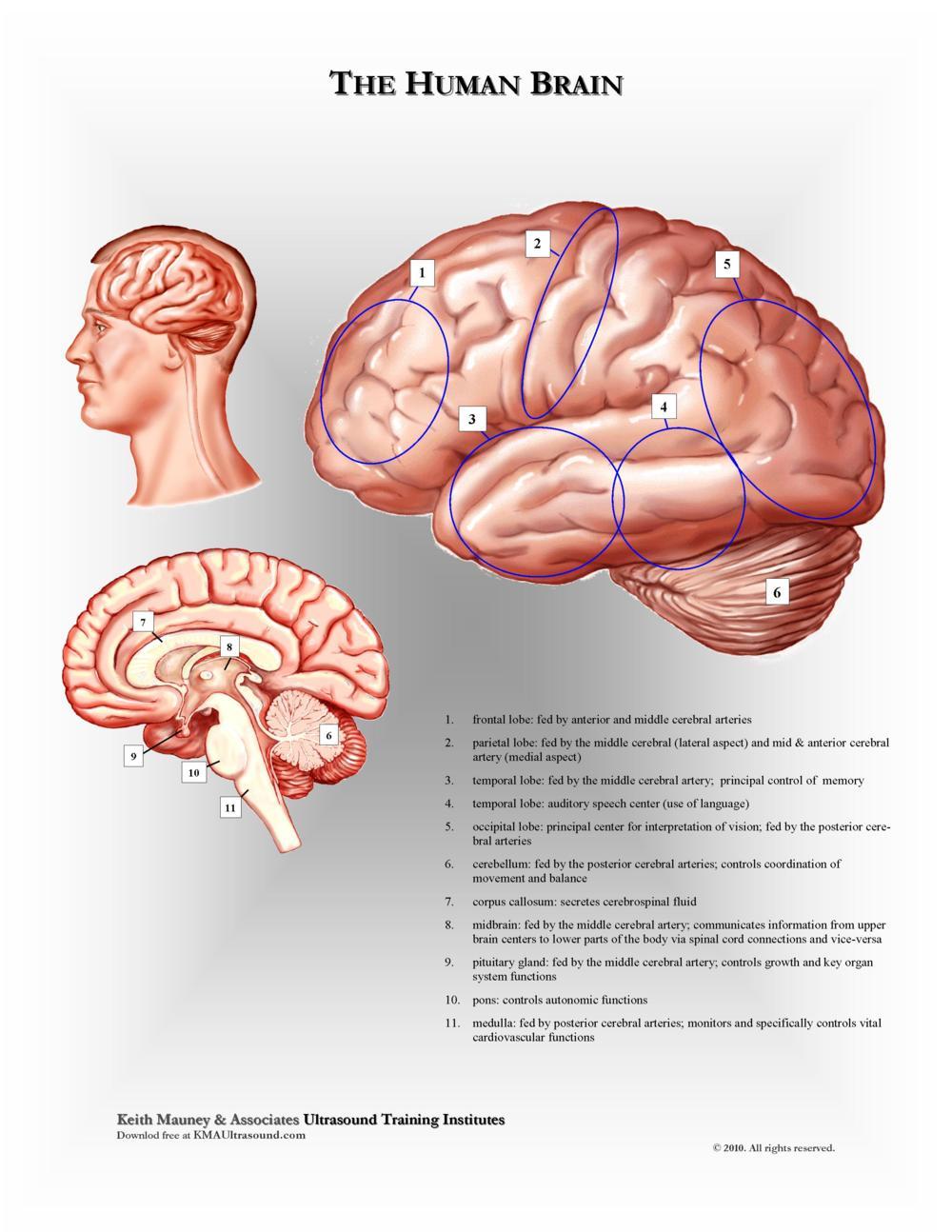 KMA Ultrasound Brain