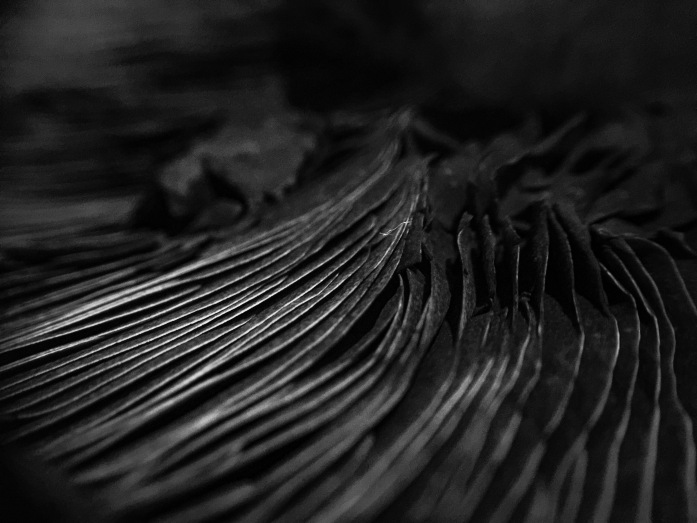 land-of-gills-mushroom-photography-black-and-white-in-the-details-lori-ono.jpeg