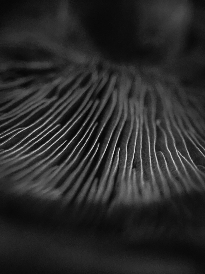 land-of-gills-3-mushroom-photography-black-and-white-in-the-details-lori-ono.jpeg