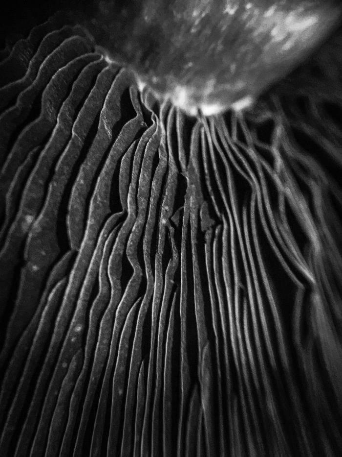 land-of-gills-2-mushroom-photography-black-and-white-in-the-details-lori-ono.jpeg