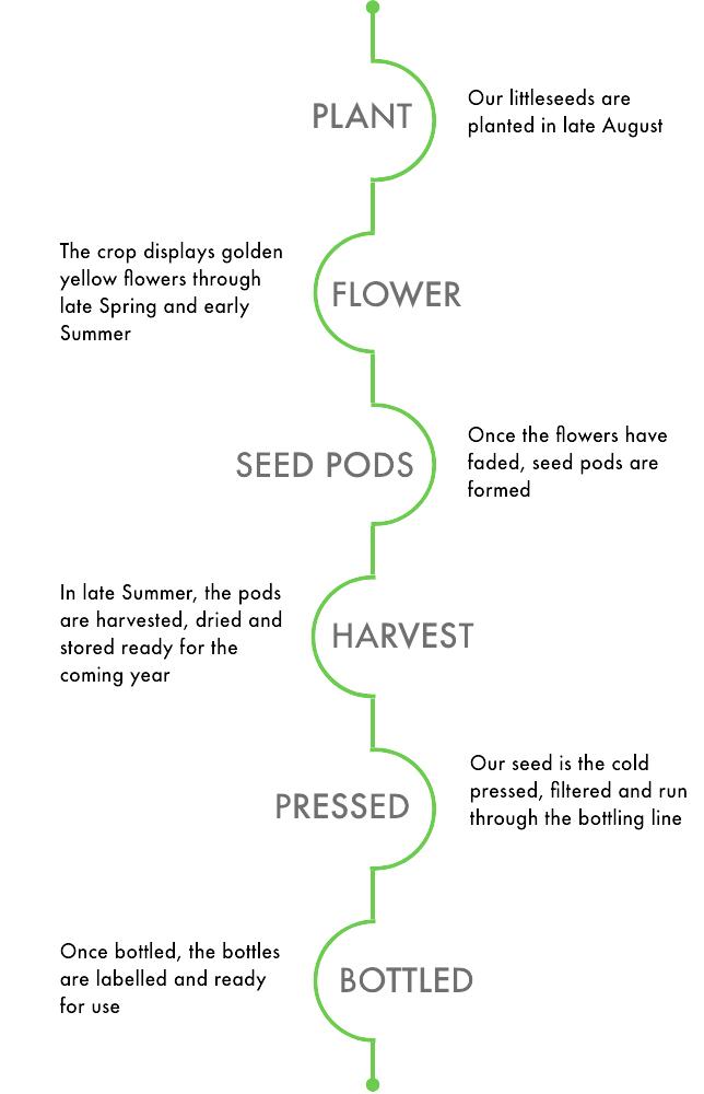 littleseed timeline.jpg