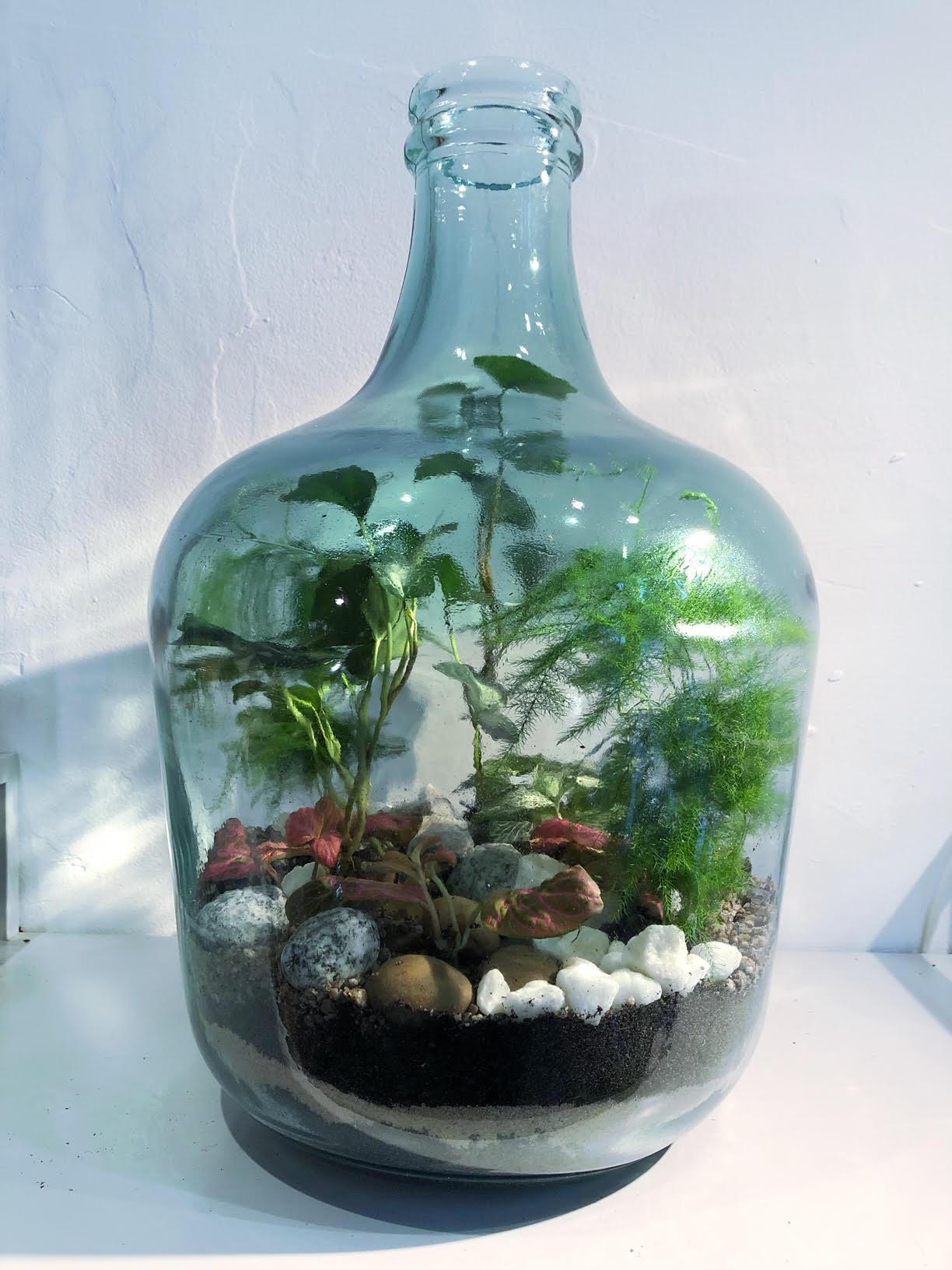 large bottle terrarium, bottle terrarium, large terrarium, how to make a terrarium, terrarium plants, closed terrarium plants, sealed terrarium plants
