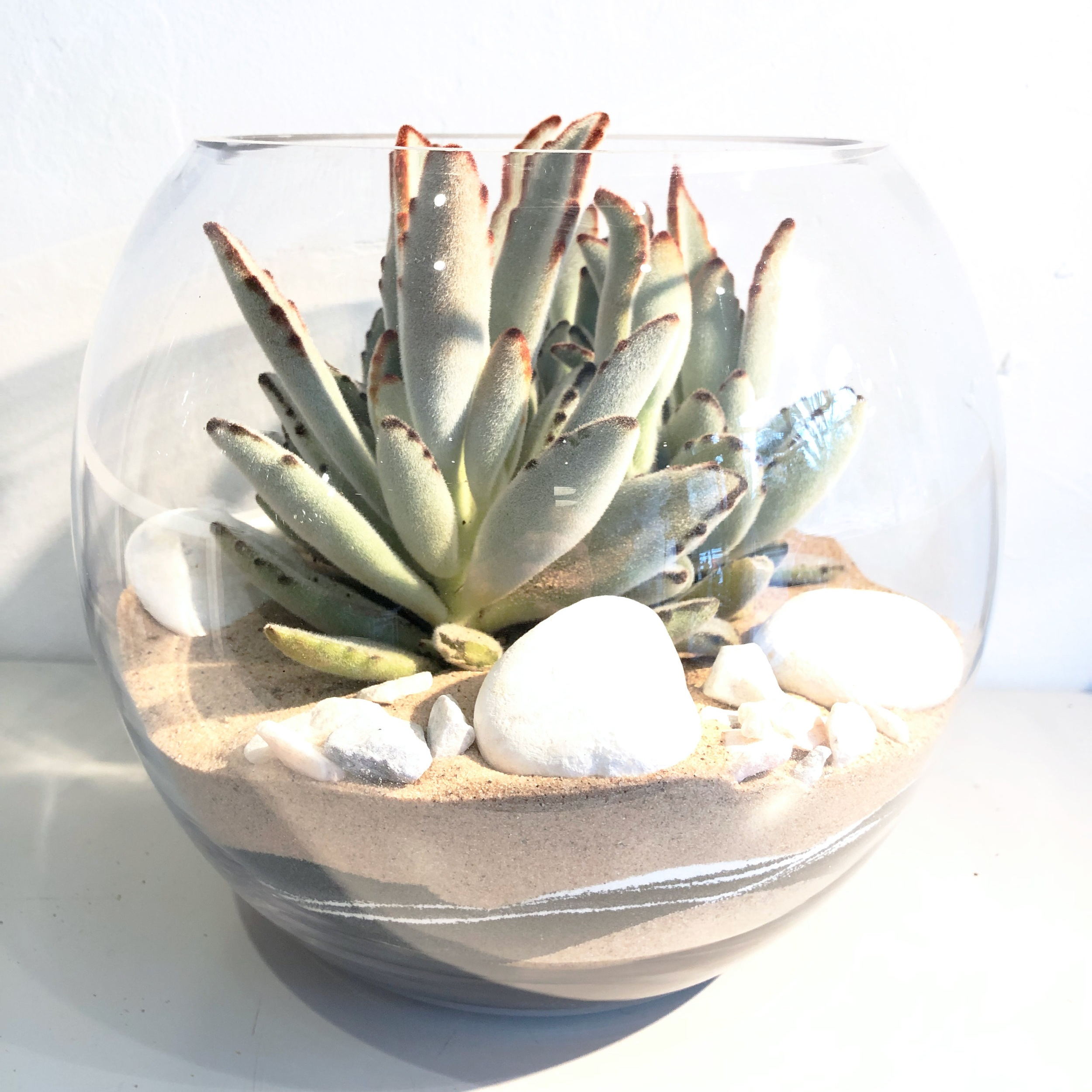 We like to plant one large succulent into this open succulent terrarium.
