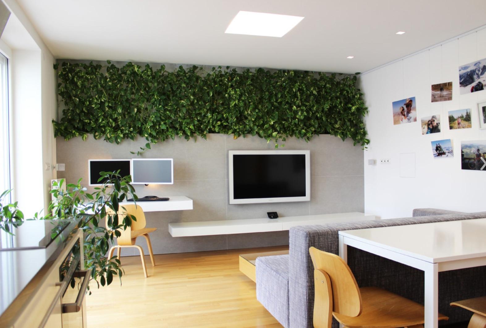 Meeting Room Wall Plants