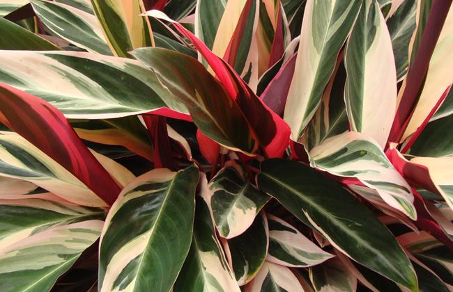 Colour office plants