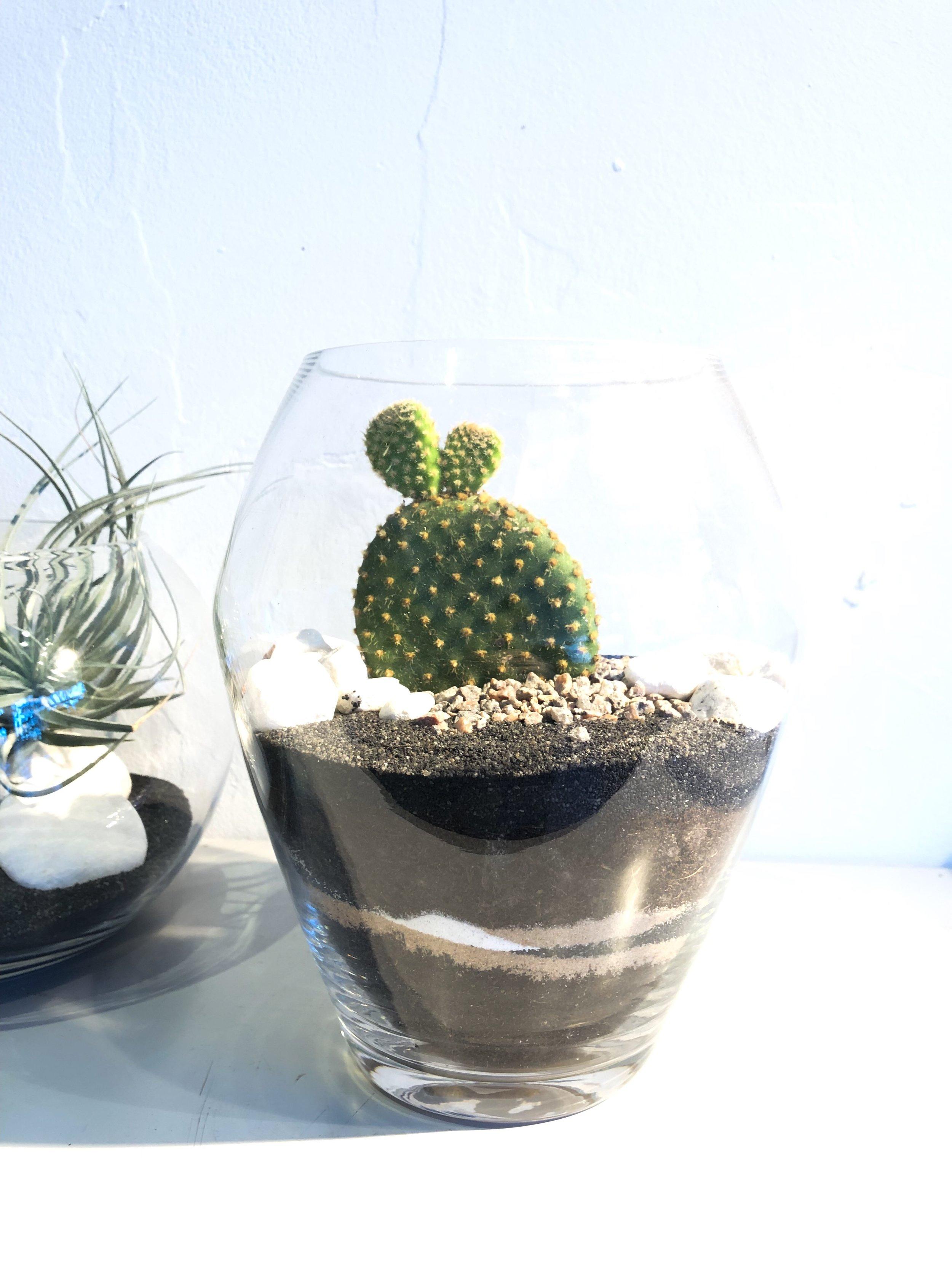 cactus terrarium, cactus terrarium kit, cactus terrarium for sale, hanging cactus terrarium, cactus terrarium care