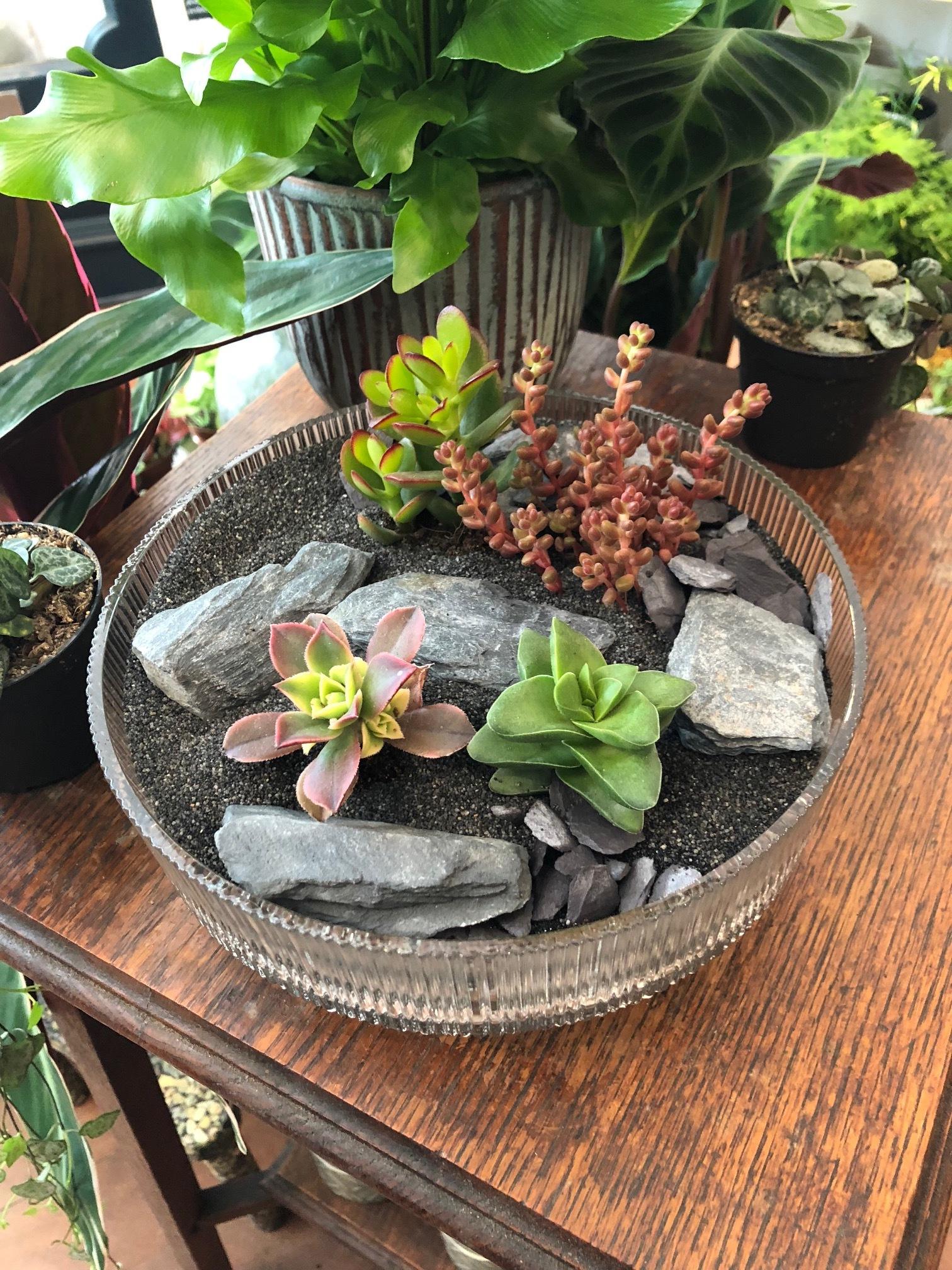 succulent garden, succulent garden indoor, how to make a succulent garden, mini succulent garden