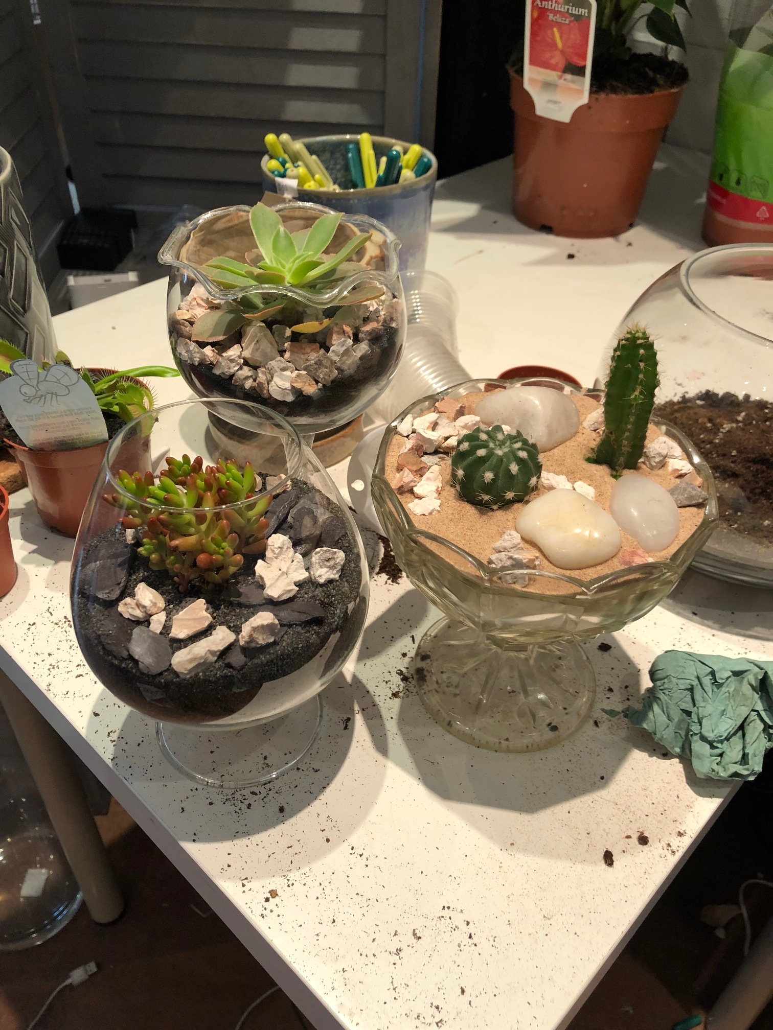 custom terrariums, Sundae Glass Terrariums, custom terrarium background, custom plant terrariums