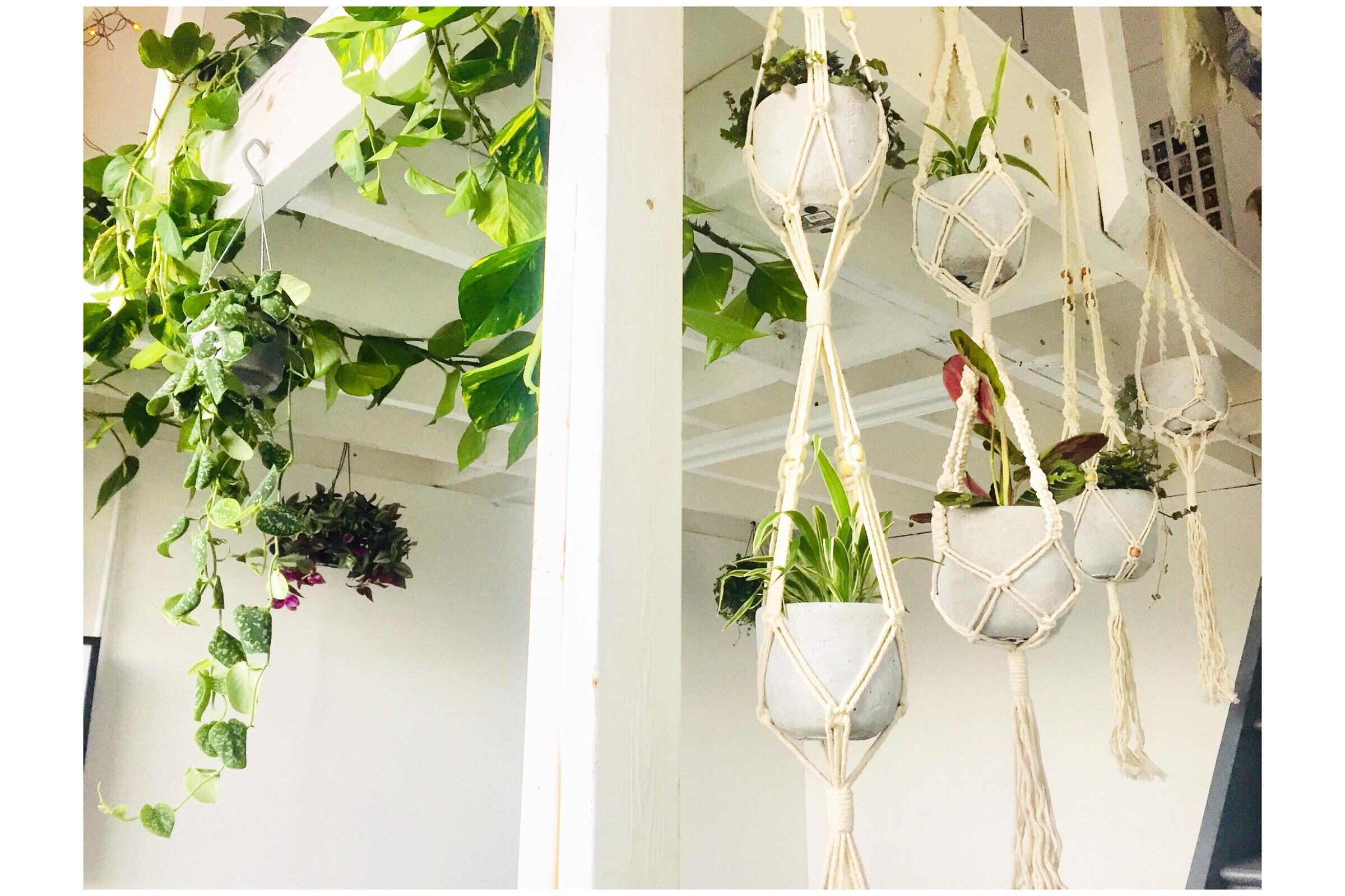 indoor plants, london plant, london plant installation, best indoor plants, small indoor plants, types of indoor plants, indoor plants uk, large indoor plants for sale