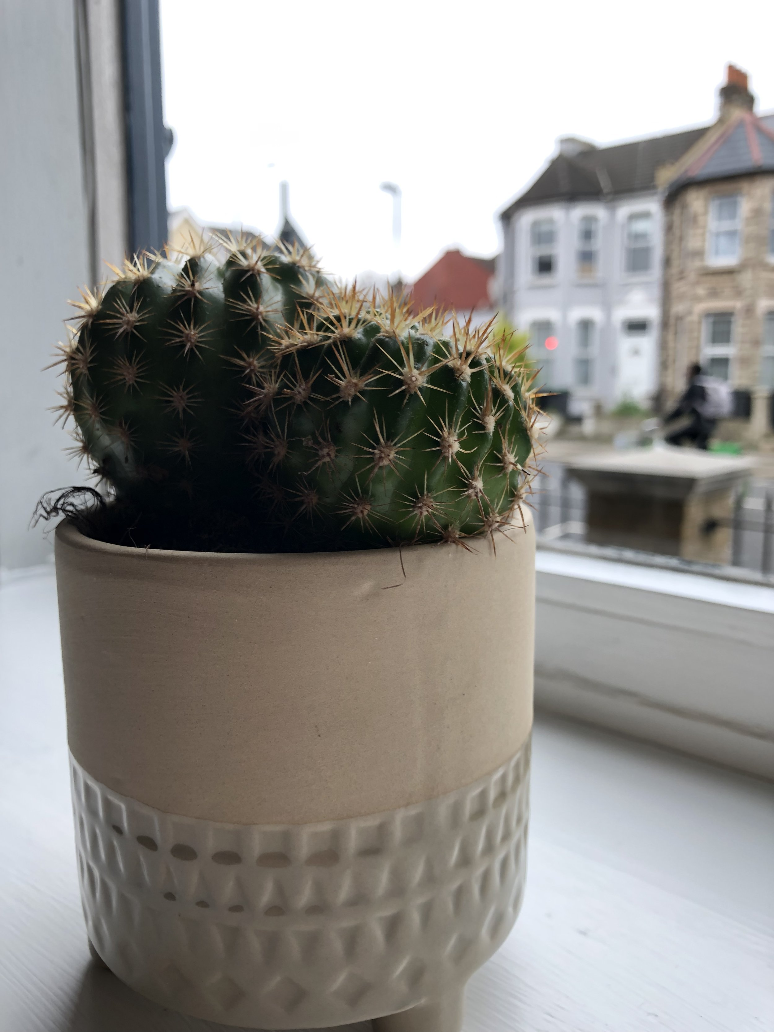Sun loving Barrel Cacti
