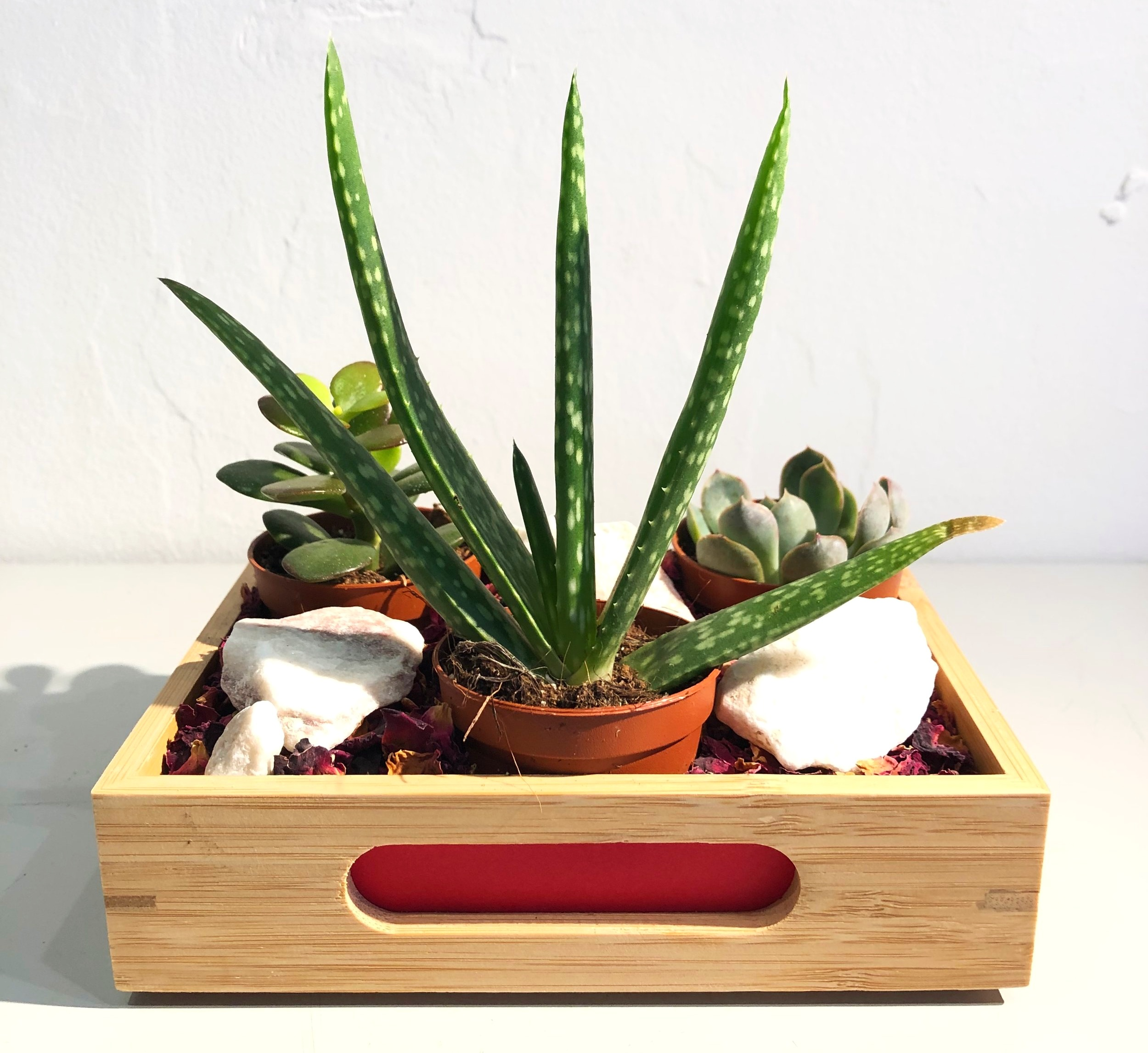plant gifts, promotional plant gifts, plant gift ideas, potted plant gifts