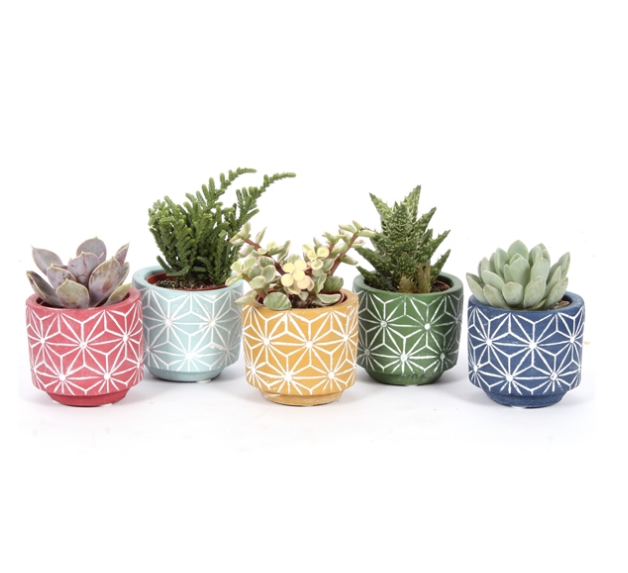 Succulent Wedding Favours - UK Wide Delivery — Heron Hawker