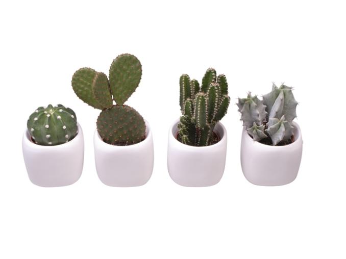 Cactus wedding gift