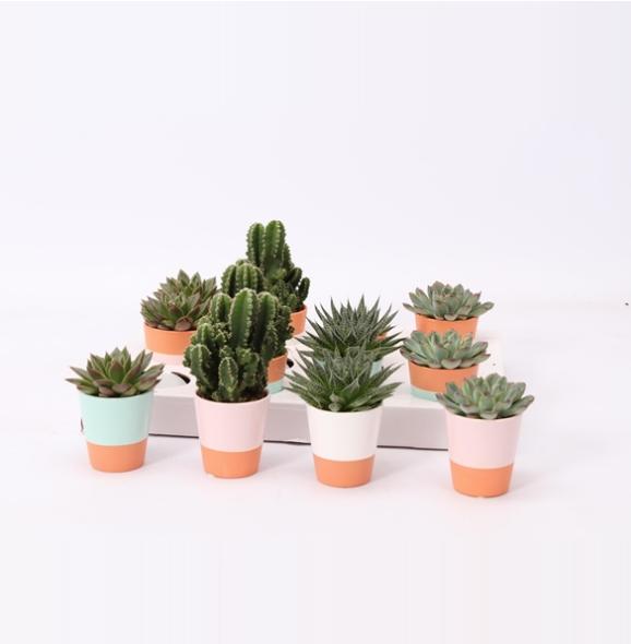 Cute plant wedding gifts