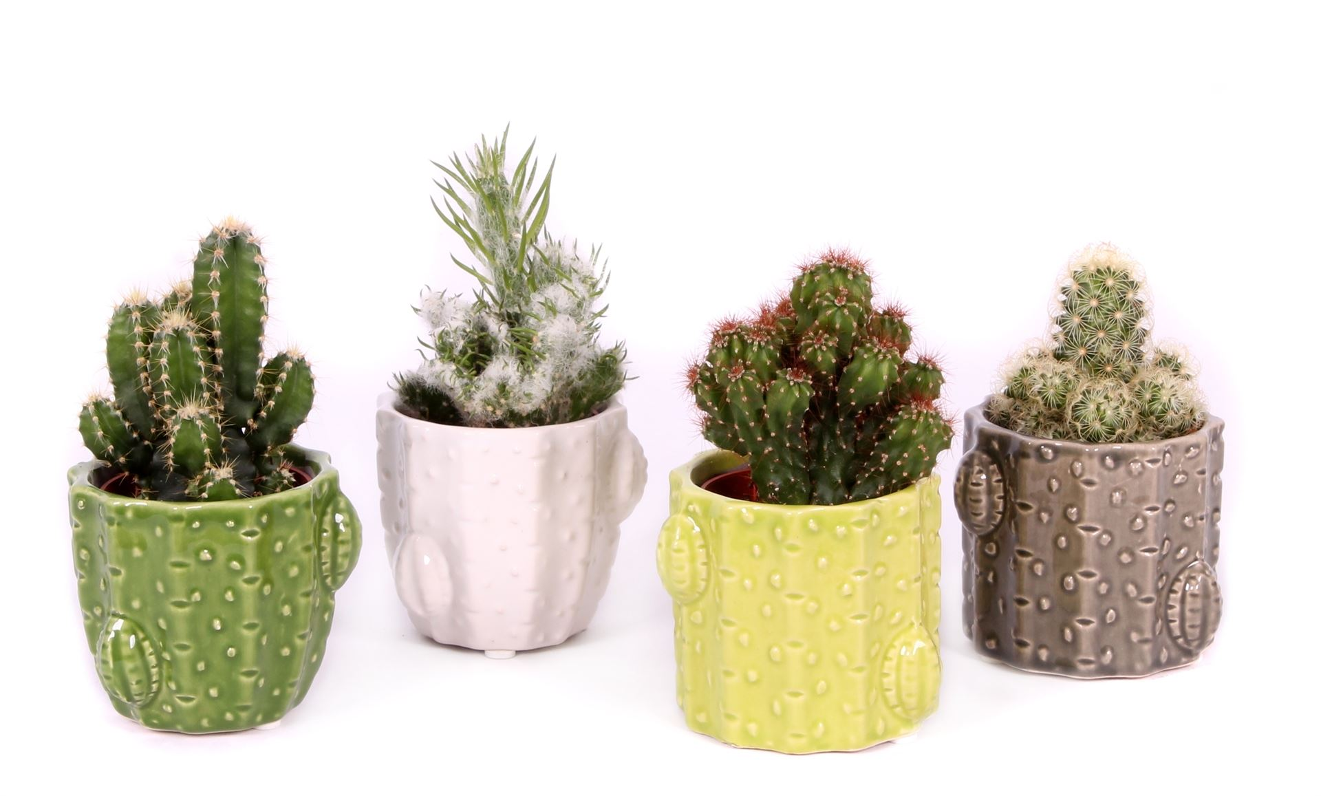 Cactus wedding gifts in pots