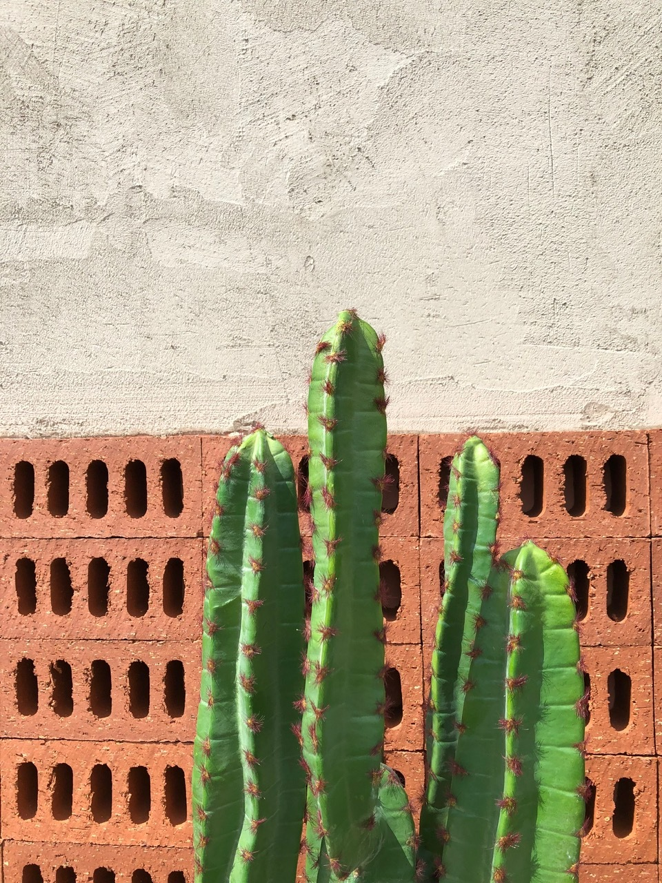 Installing artificial cacti in London and fake cacti in london
