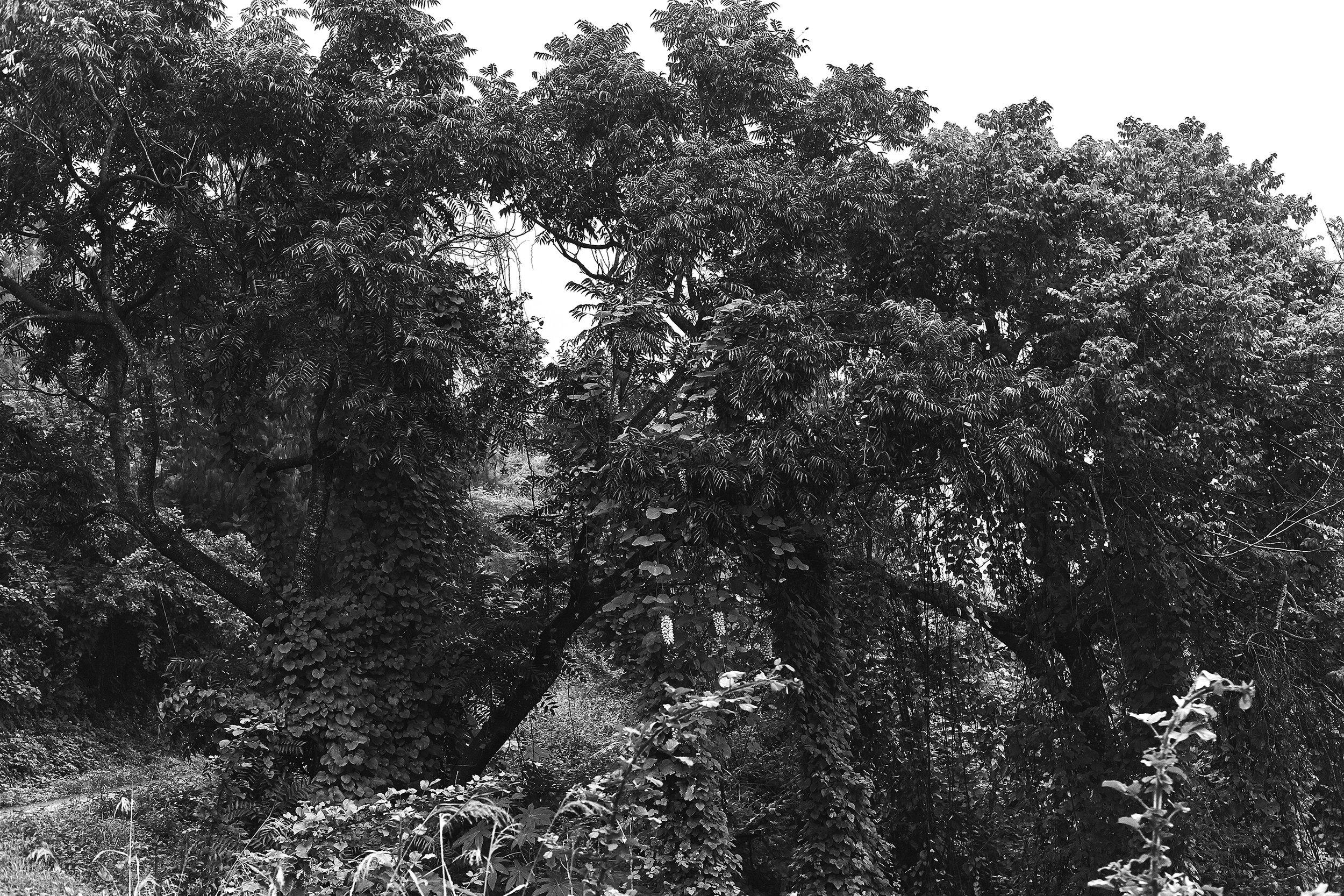 The Trees copy.jpg
