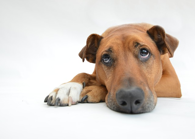 sad-dog-404.jpg