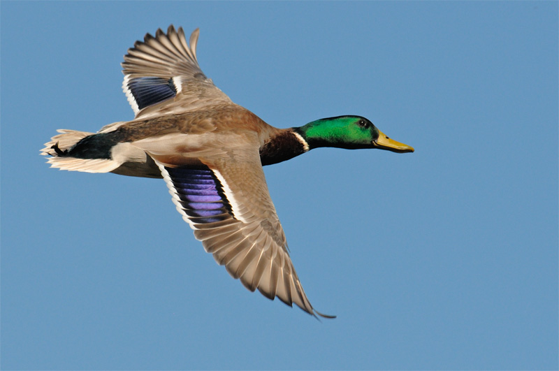 Wind Motion Decoys for the best Duck hunting.