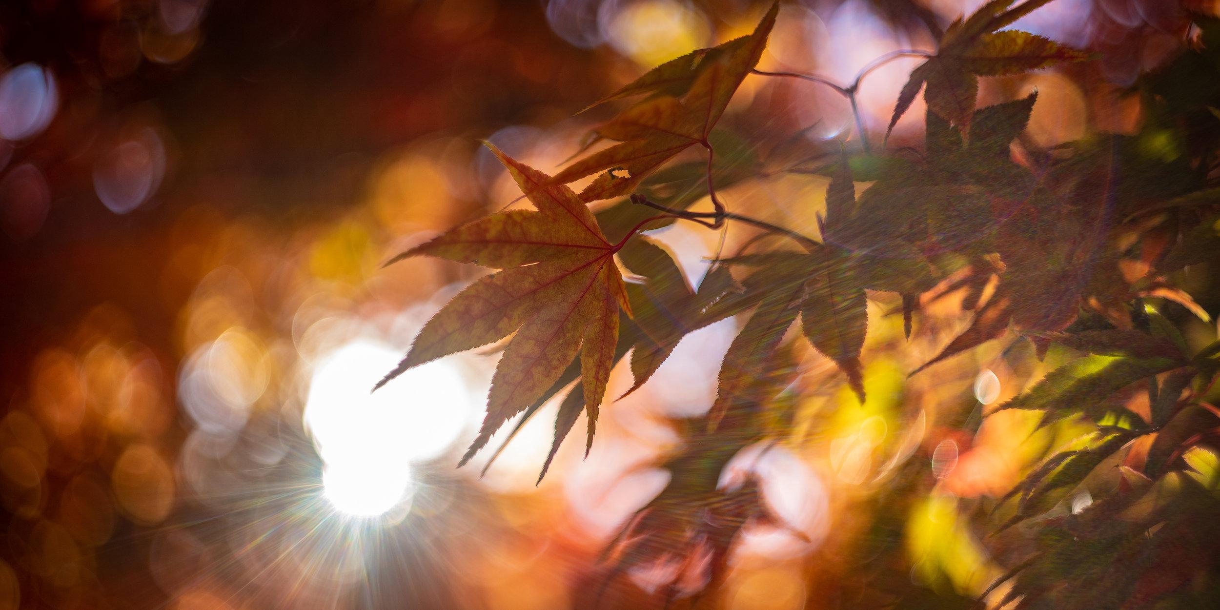 Fall Walk Down Westville-24.jpg