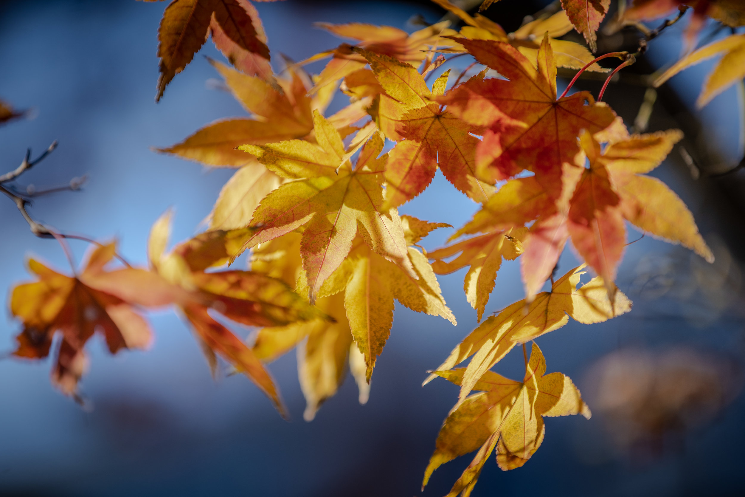 Fall Walk Down Westville-13.jpg