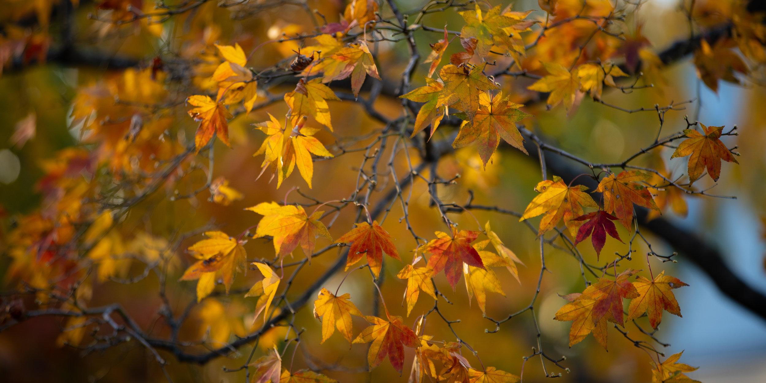 Fall Walk Down Westville-54.jpg