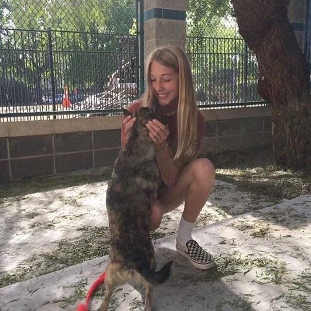 """""""I went to tvar and helped with the dogs and walked and played with them!"""" Thanks to @bella.glasson for helping out her community! #doitforlilysrv - Remember to DM us your acts of kindness in honor of Lily and visit our website: doitforlily.cf"""
